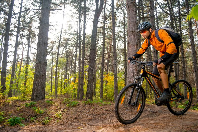 Cyklisten i apelsin som rider mountainbiket på slingan i det härligt, sörjer Forest Lit vid den ljusa solen arkivfoton
