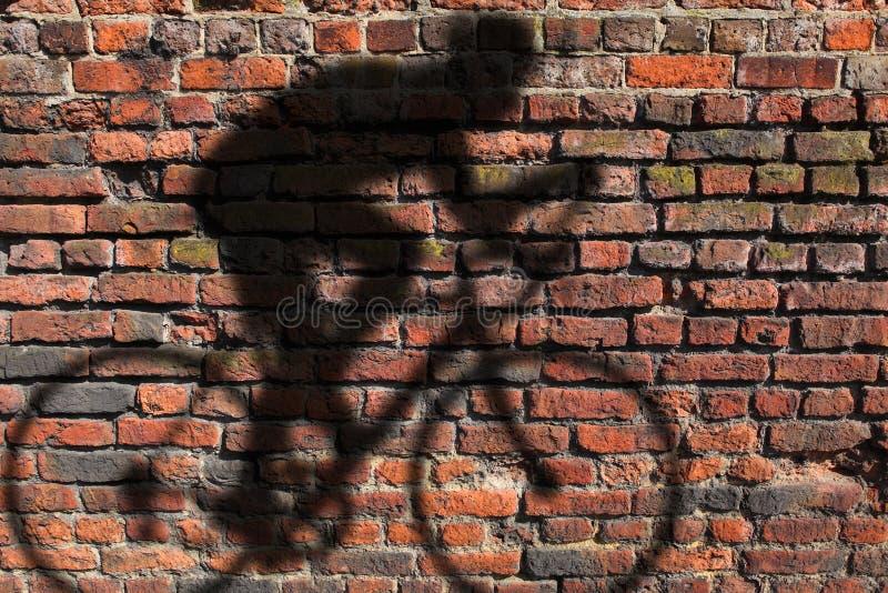 cyklisty cienia ściana obrazy stock