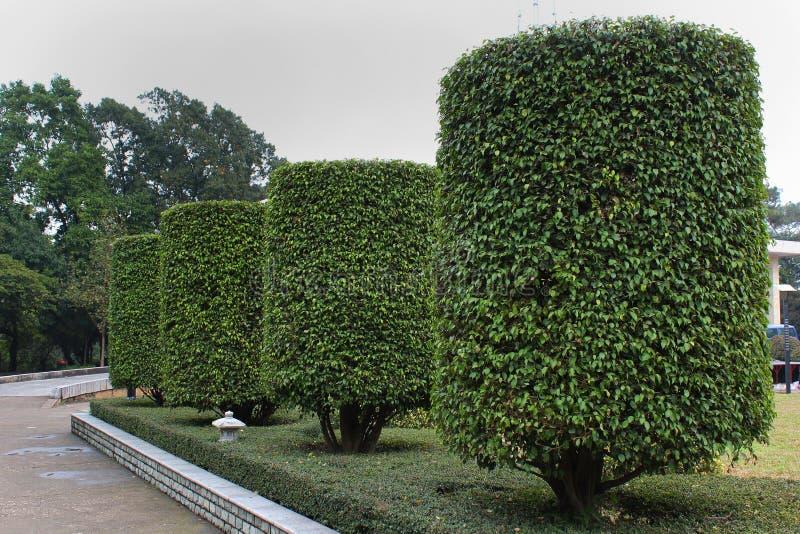 Cylindryczni naszywani krzaki przy ludźmi ` s parka w Nanning, Chiny zdjęcia royalty free