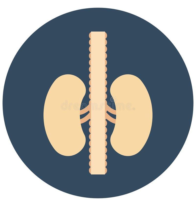 cynaderki, organ, Odosobniona Wektorowa ikona która może łatwo redagować lub modyfikująca royalty ilustracja
