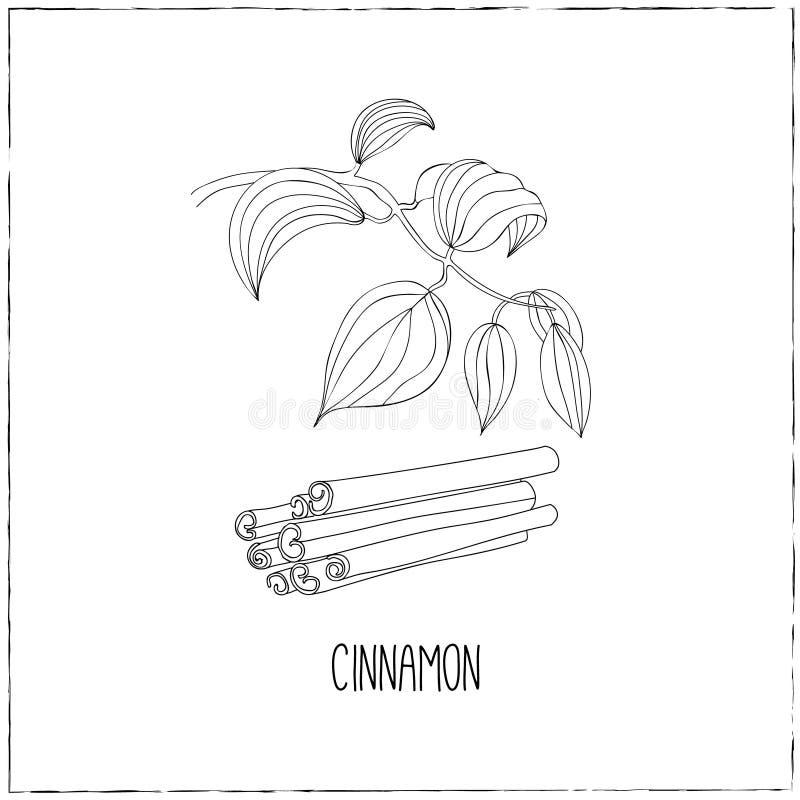 cynamon Kuchenni pociągany ręcznie ziele i pikantność ilustracja wektor