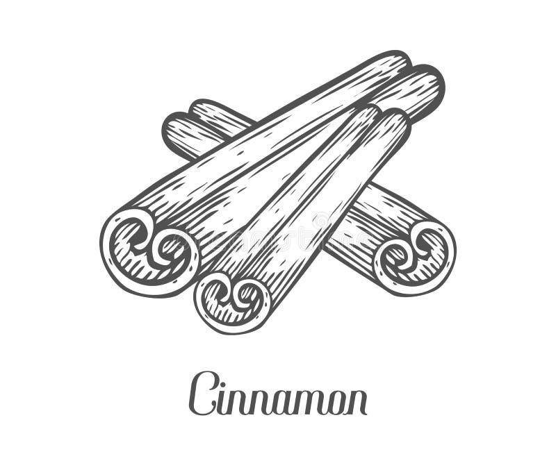 Cynamonowego kija nasieniodajna roślina Ręka rysująca nakreślenie wektorowa ilustracja odizolowywająca na bielu ilustracja wektor