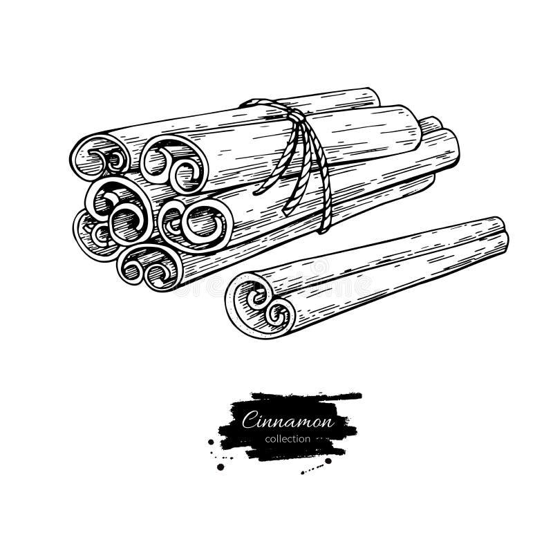 Cynamonowego kija wiązki wektoru wiązany rysunek Ręka rysujący nakreślenie Sezonowy jedzenie ilustracja wektor