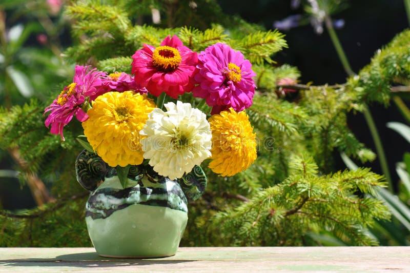 Cynie kwitną w wazie zdjęcia royalty free