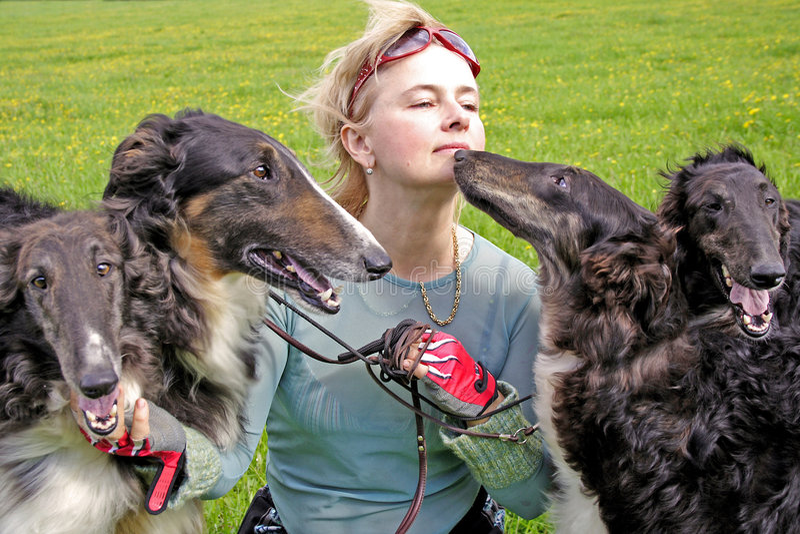 Cynologist con los perros excelentes del borzoi fotografía de archivo libre de regalías