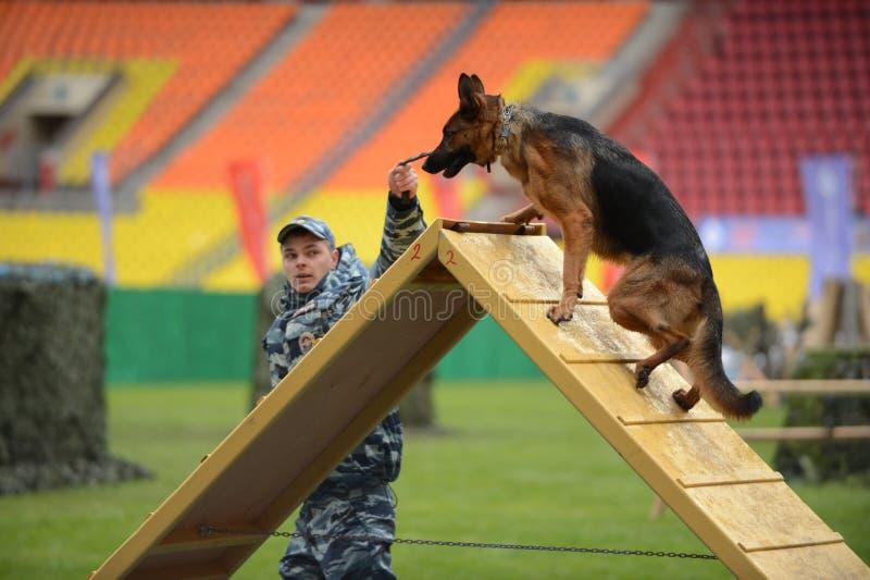Cynologists met honden in Moskou royalty-vrije stock foto
