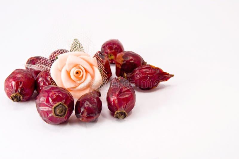Cynorrhodons et fleur rose photo stock