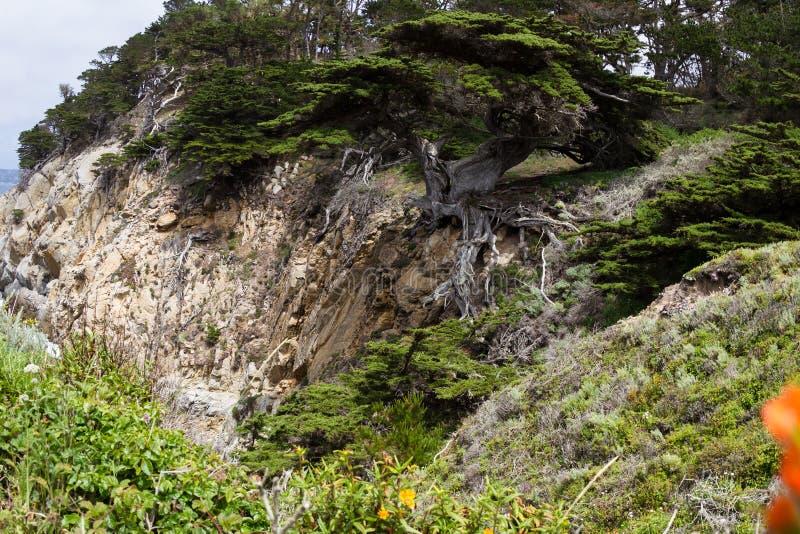 Cypern träd på kusten royaltyfri bild