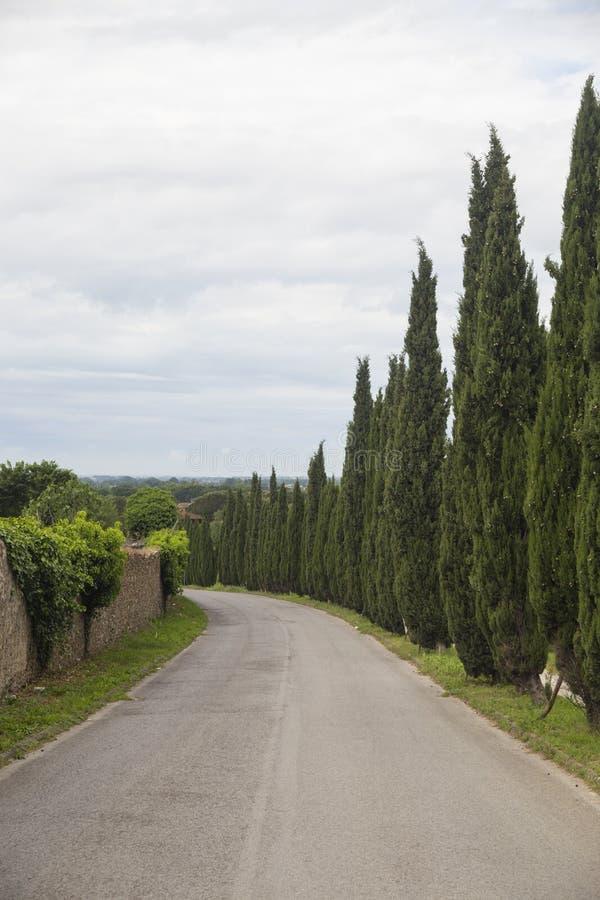 Cyprès de la Toscane photos libres de droits