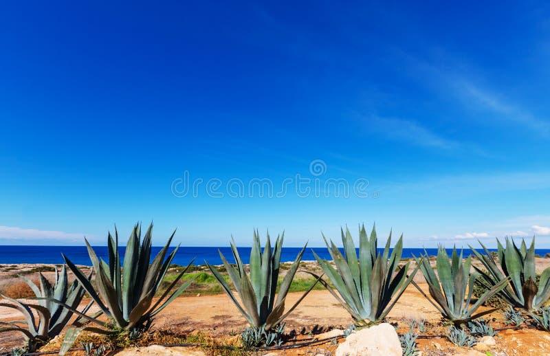 Cypr fotografia royalty free