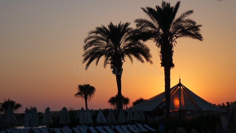 Cypr wspaniały zmierzch z drzewkiem palmowym zdjęcia royalty free