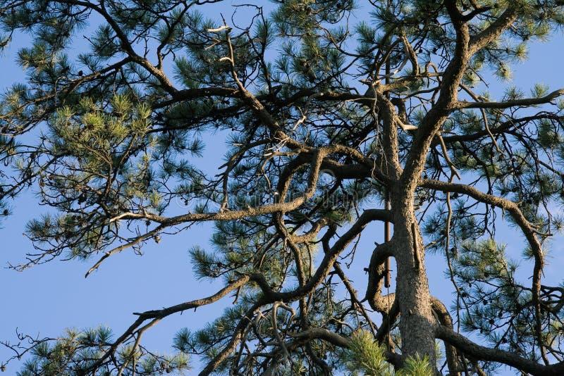 Cypress stock photo