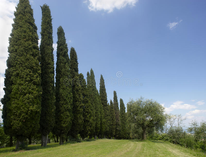 Cypress fotografie stock