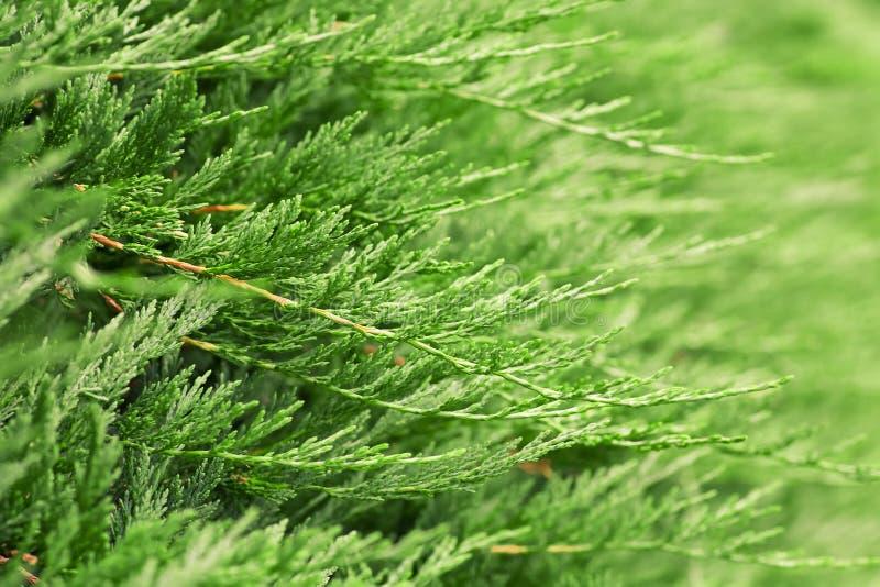 cypress arkivfoton