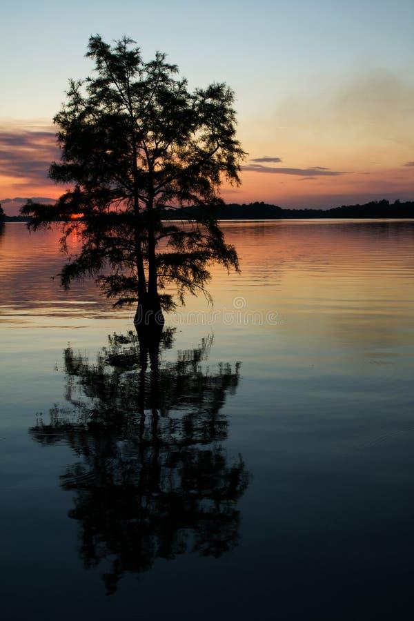 Cypress imagem de stock royalty free