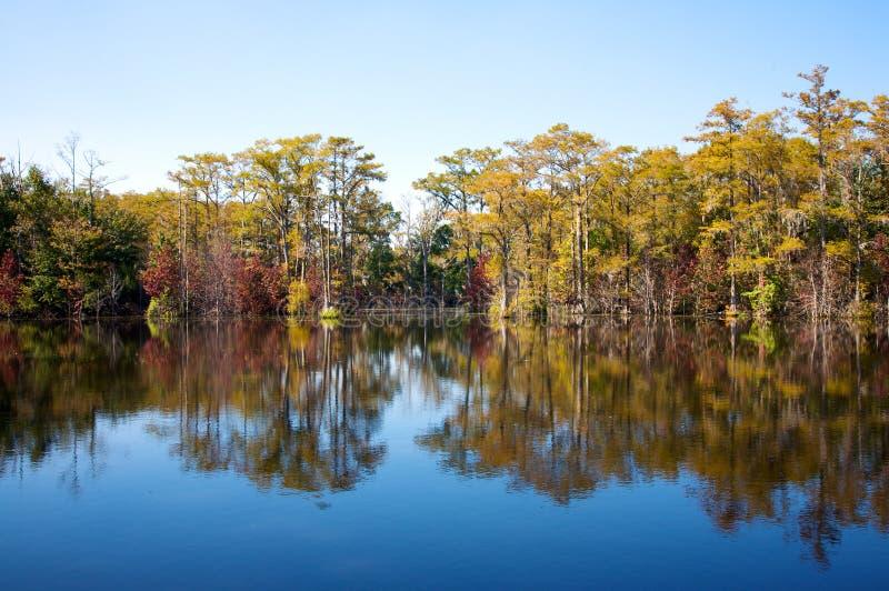 cypress 2 mal dammtrees fotografering för bildbyråer