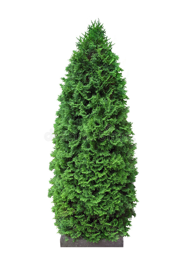 Cypress stock images