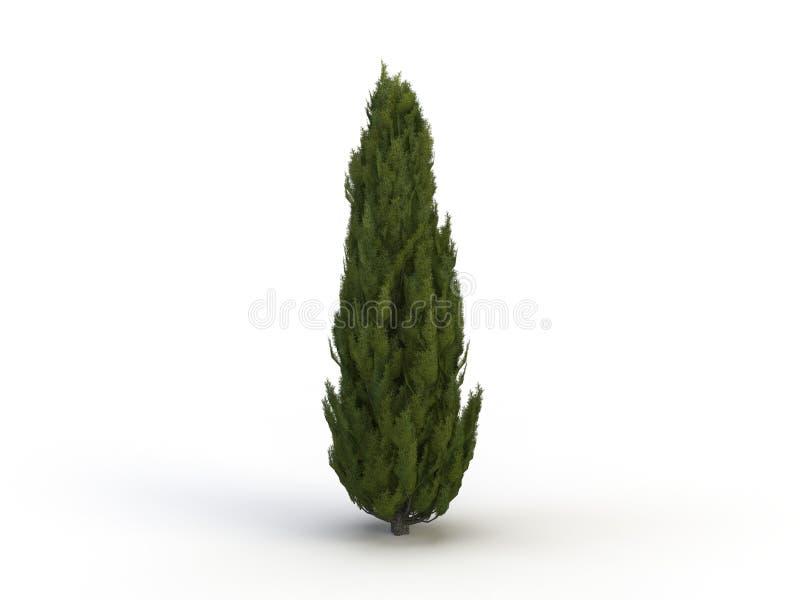 Cypress stock de ilustración