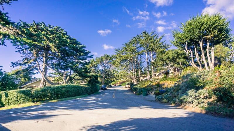 Cypress alinhou a rua no Carmel-por--mar foto de stock royalty free