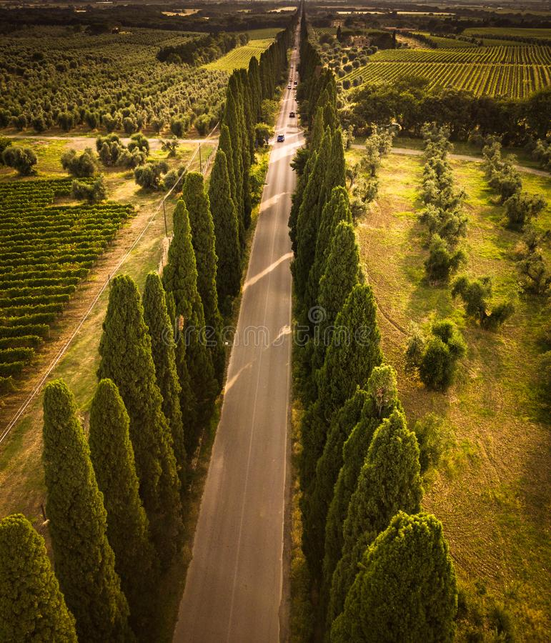Cypress alley with rural country road, Tuscany. Italy stock image