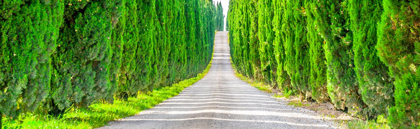 Cypress alley with rural country road, Tuscany, Italy. Panoramic view. Cypress alley with rural country road, Tuscany, Italy. Panoramic view royalty free stock images