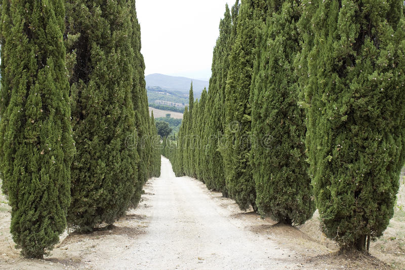 Download Cypress Alley In Tuscany Royalty Free Stock Images - Image: 21296689