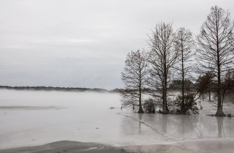 Cypress calvo en el lago congelado en invierno imagenes de archivo
