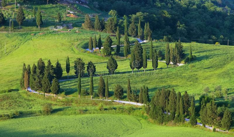 Download Cypress Curve Royalty Free Stock Photos - Image: 33158818