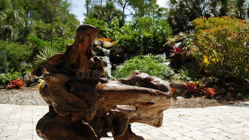 Cypress driftwood. In a church garden in Naples, Florida royalty free stock photography