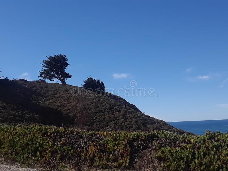 Cypress en el viento foto de archivo libre de regalías