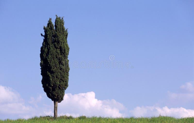 Cypress en Toscane Italie images stock