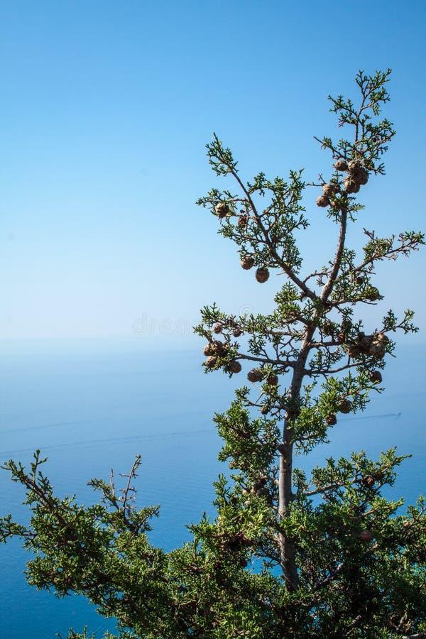 Cypress på det medelhavs- royaltyfri fotografi