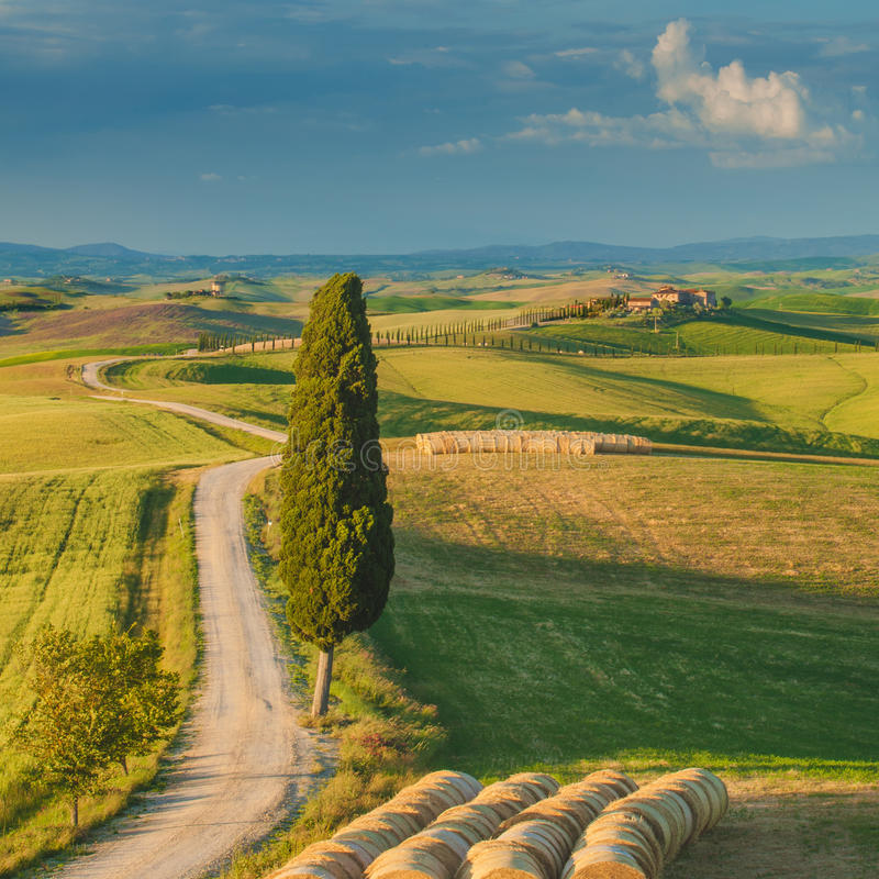 Cypress on the road in the middle of the Tuscan countryside stock photo