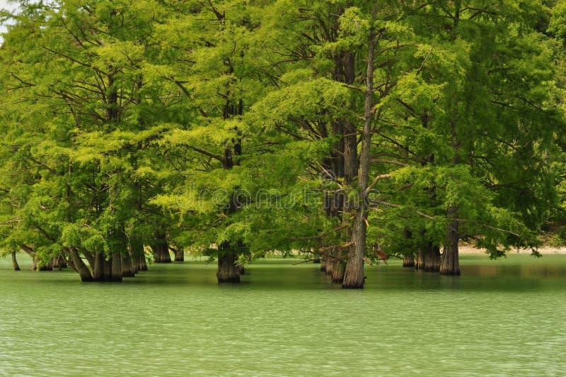 Cypress sjö royaltyfri bild