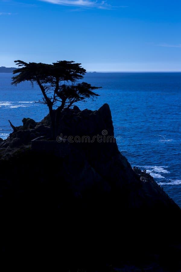 Cypress solitário, movimentação de 17 milhas foto de stock