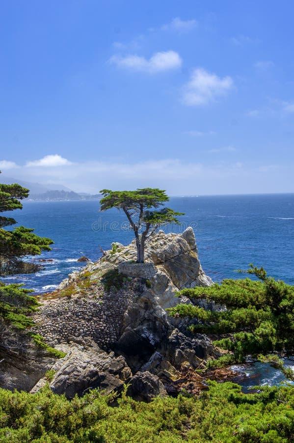 Cypress solitaire, Pebble Beach photo libre de droits