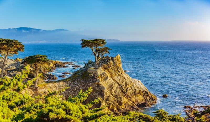 Cypress solitario fotos de archivo libres de regalías
