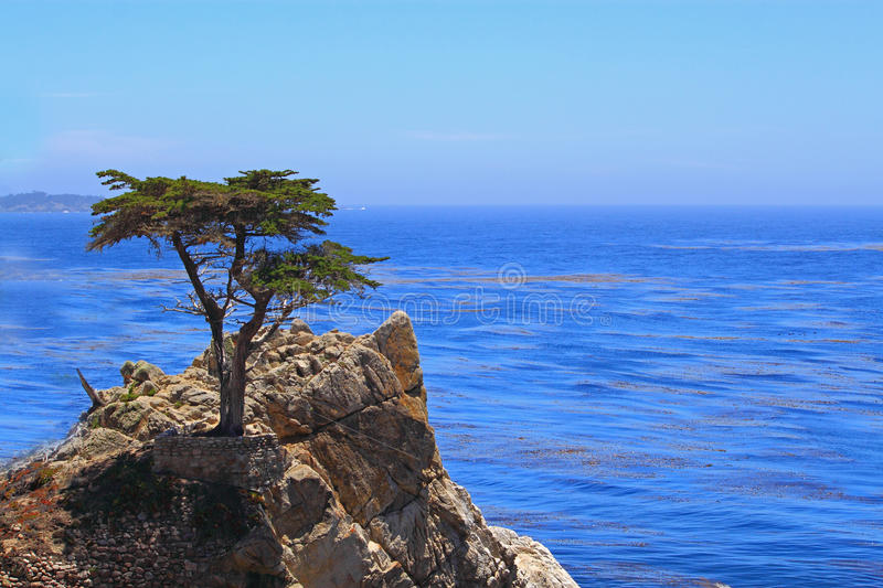 Download Cypress solitario foto editorial. Imagen de playa, horizontal - 41911741