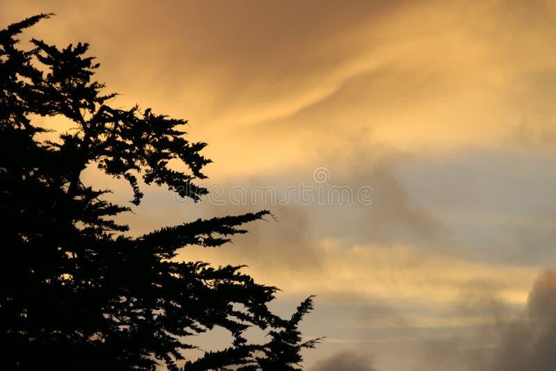 Cypress tree på solnedgången arkivbild