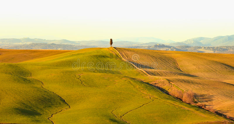 Download Cypress Tree And Rolling Hills Rural Landscape In Crete Senesi, Tuscany. Italy Stock Photo - Image: 29790298