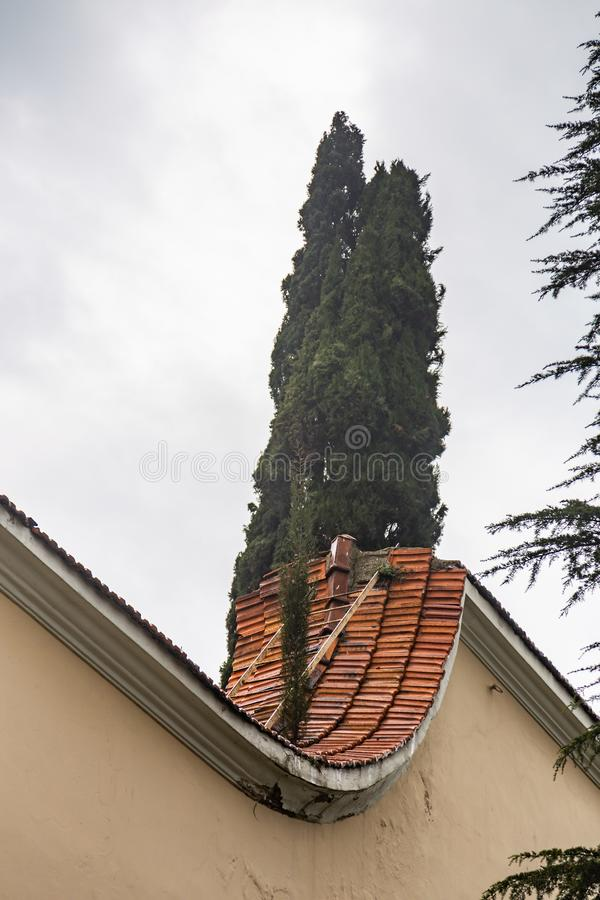 Cypress tree sticks out from behind a tiled roof fence in Istanbul, Turkey stock photo