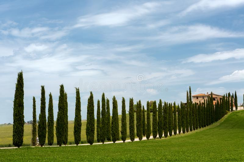 Cypress trees and villa stock images