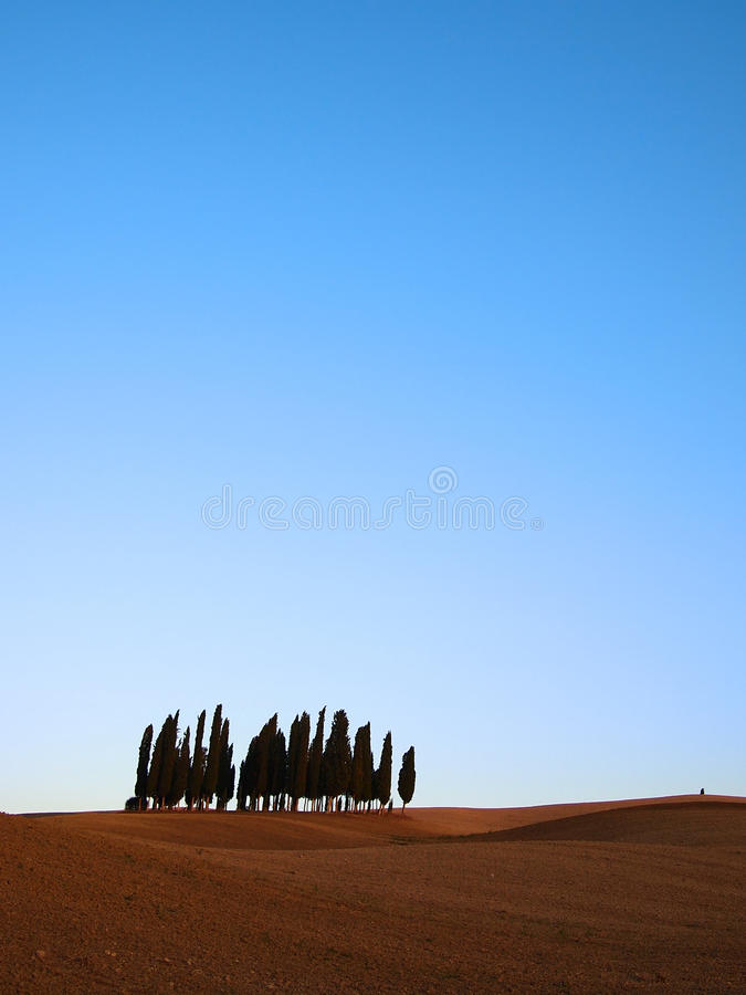Download Cypress Trees Stock Images - Image: 31345954