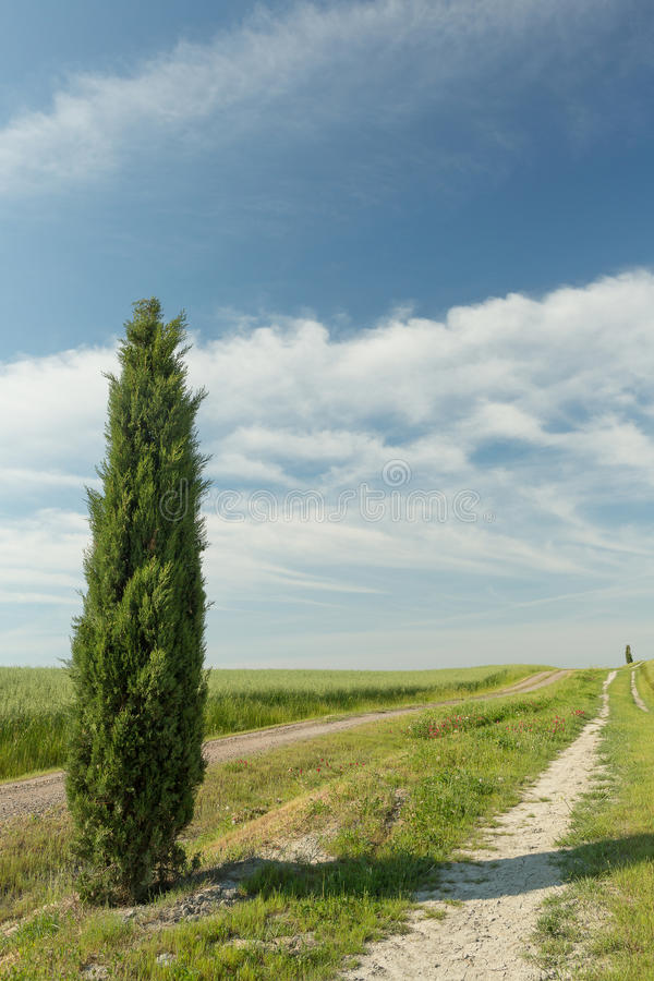 Download Cypress in Tuscany stock image. Image of field, blue - 25456365