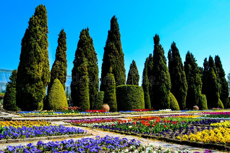 The cypress valley of the Botanical Garden royalty free stock photo