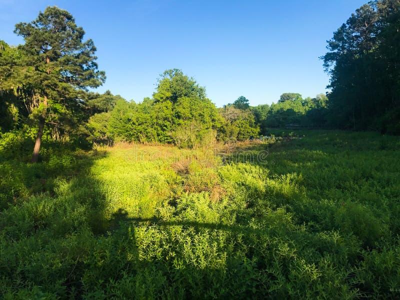 Cypress Wetlands in Port Royal, South Carolina.  royalty free stock images
