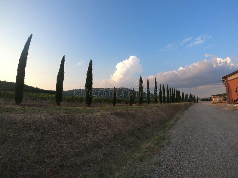 Cypress winery in Tuscany  italy stock photos