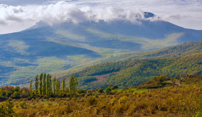Cypresses trees along way among field in autumn. Crimea royalty free stock images