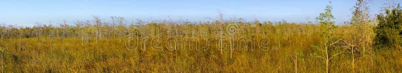 cypresseverglades landscape panorama royaltyfria bilder