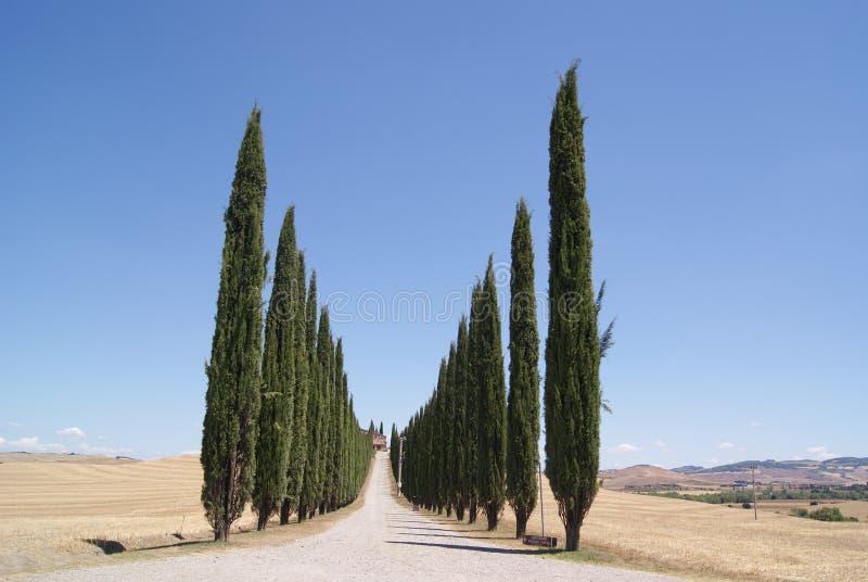 Cypressgata royaltyfri fotografi